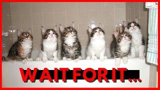 Funny Cat Videos (BATH TUB COMPILATION) - Cute Cat Videos | Funny Animal Videos
