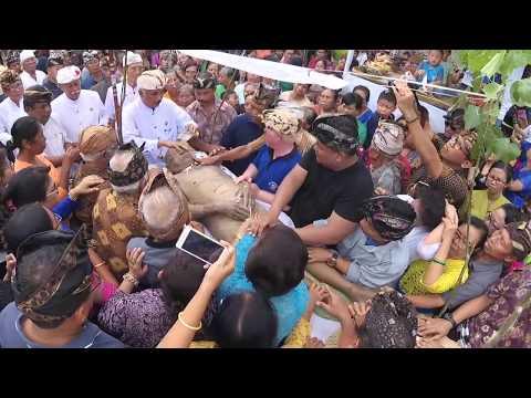 Karya Pelebon / Upacara Ngaben I Dewa Nyoman Dublig Desa Belatungan Tabanan