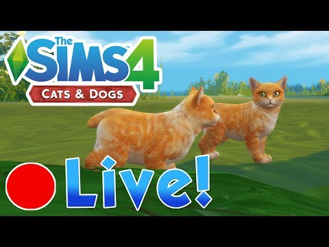 Sims 4 Cats Dogs Our Cheesey Kittens Emergency Vet Visit Finished Livestream