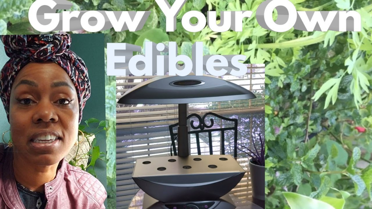 GROW YOUR OWN EDIBLES WITH AERO GARDENING ????