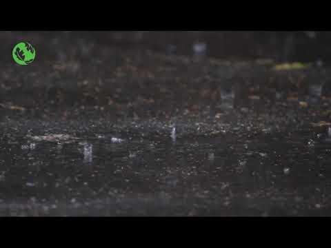 EPIC Rain Thunder Storm Relax Sound to Sleep
