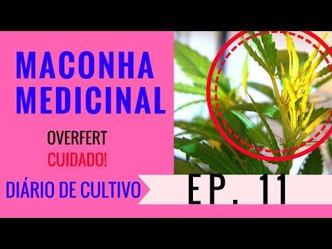 Cultivo Indoor Maconha Medicinal-  Deficiência Por Overfert- Diário de Cultivo Episódio 11