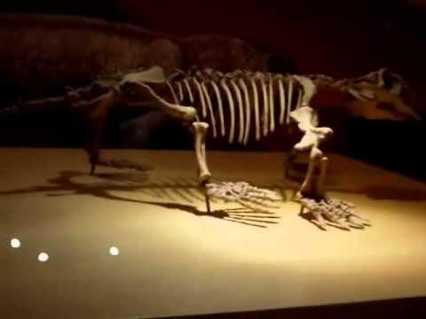 Jurassic park asturias Parte 2