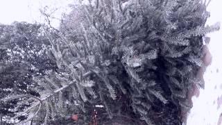 Zitternder Weihnachtsbaum