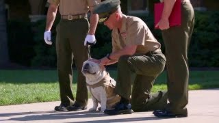 Marine Corps Mascot Bulldog, Chesty XIV, Promotion to Corporal