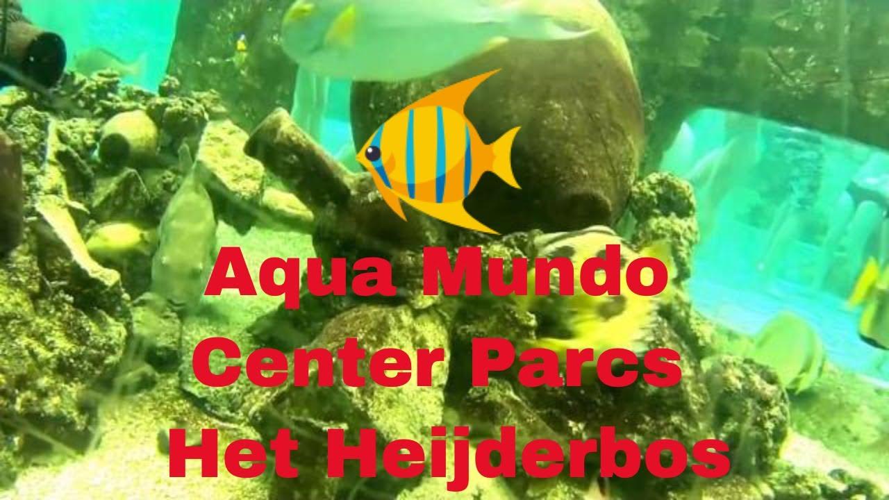 Aqua Mundo Center Parcs Het Heijderbos Youtube