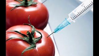 Правда о продуктах Г.М.О. которую не спешат обнародовать. Чем реально нас кормят. Док. фильм.