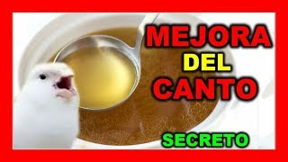 MEJORAR CANTO DE CANARIOS Receta Casera CANTO DEL CANARIO