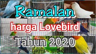 harga love bird | ramalan harga love bird 2020
