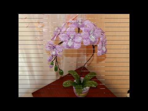 Лучшие фотографии домашней орхидеи