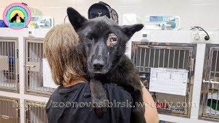 Так собака стала инвалидом Обидеть беззащитную собаку мог только слабый и подлый help the dog