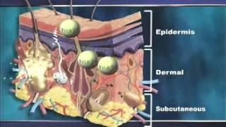 NIA24® — Niacin Powered Skin Therapy 3 Thumbnail
