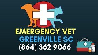 24 Hour Emergency Vet Greenville SC | Emergency Vet Clinic In Greenville SC | (864) 362 9066