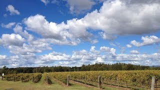 Gambar cover Hunter Valley Wineries and Wilderness Small-Group Tour