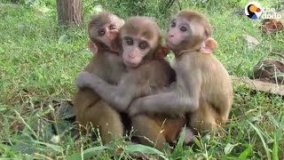 Baby Monkeys Can't Get Enough Cuddling