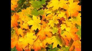 Autumn Words Seasons Vocabulary ESL