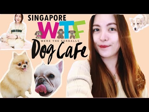 WTF SINGAPORE! OUR FULL DOG CAFE EXPERIENCE ⍣ CUTENESS OVERDOSE #TheWickeRmoss