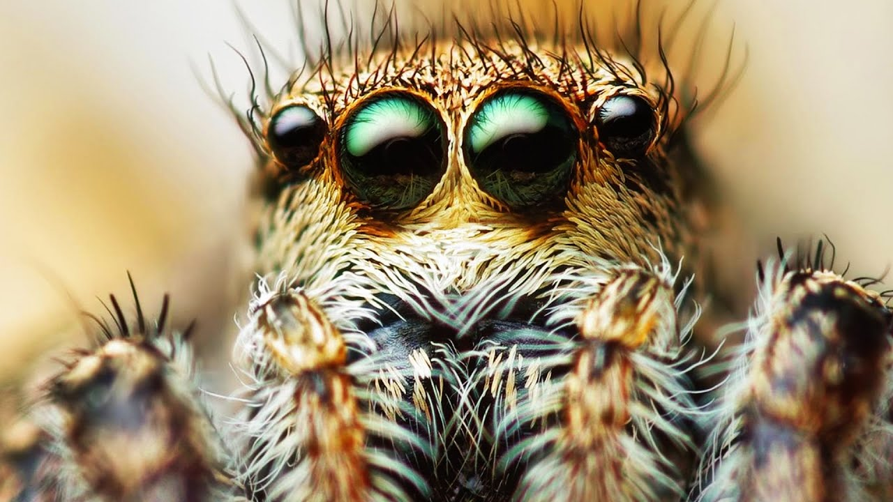 the scariest SPIDER in the WORLD! - YouTube