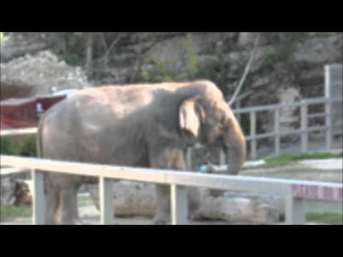 Zoo Debate