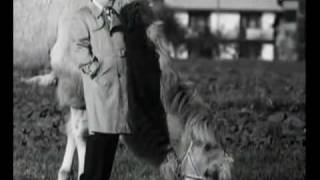 Duże zwierzę - dialog z wielbłądem