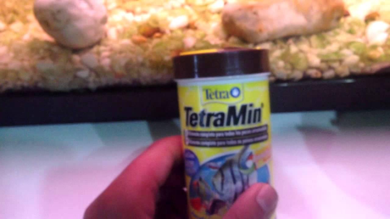 Como alimentar a alevines reci n nacidos guppys mollys for Comida congelada para peces