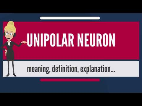 What is UNIPOLAR NEURON? What does UNIPOLAR NEURON mean? UNIPOLAR NEURON meaning & explanation