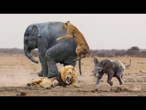 Animal Planet  Animals Documentary |Discovery Channel
