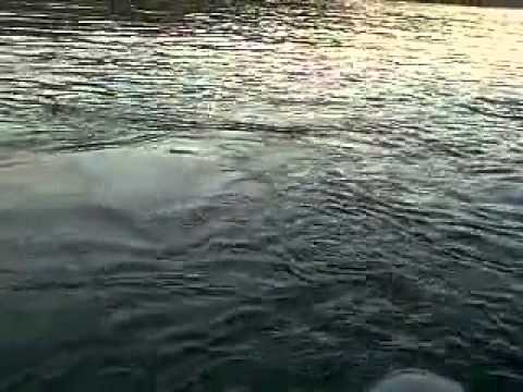 Orcas En La Patagonia Chilena Puerto Cisnes