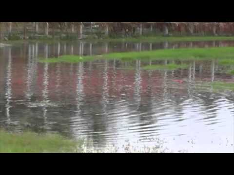Water Bubbling from the Ground