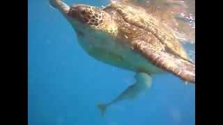 Секс морских черепах - Давай сделаем это по быстрому ! Абу Даббаб