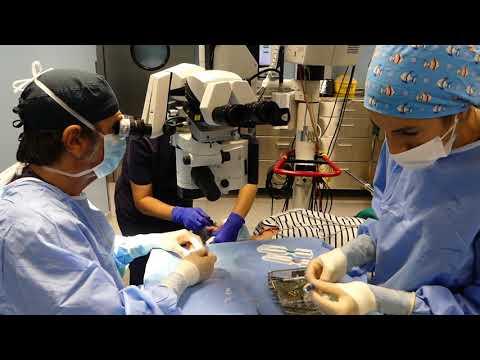 La Arruzafa participa en un estudio internacional que busca avances en tratar distrofias corneales