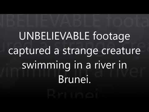 UNBELIEVABLE footage captured a strange creature swimming in a river in Brunei