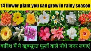 जुलाई (बरसात) में लगने वाले 14 परमानेंट फूलों वाले पौधे/You can grow 14 flower plant in rainy season