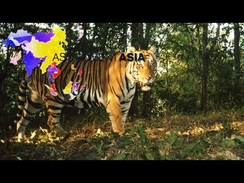 Assignment Asia—Thailand's tigers; India's forest man; Myanmar's unemployed elephants 10/29/2016