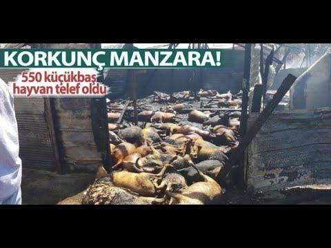 Antalya Manavgat'ta çıkan yangın nedeni ile 550 Küçükbaş hayvan yandı (2017)