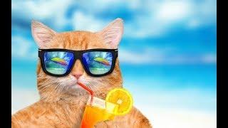 Честный обзор/Солнцезащиные очки NOMAD и TRUESPIN