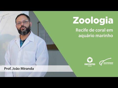 Zoologia – Cnidaria com Prof. Dr. João M. D. Miranda