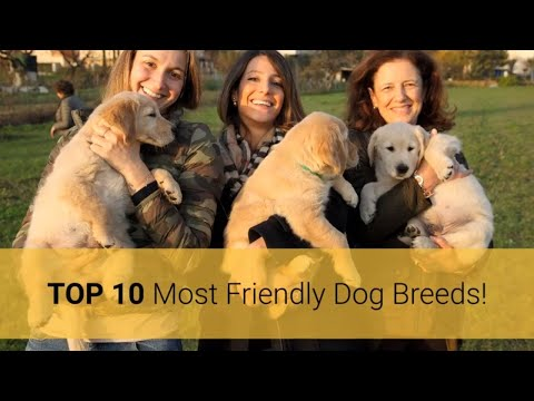 friendly-dogs-–-top-10-most-friendly-dog-breeds-in-the-world-2019!-🐕