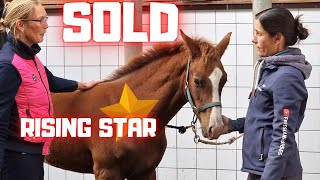 Sold! Rising Star⭐ iṡ Sold! Is this the end of the fairy tale!??   Friesian Horses