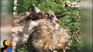 SCARED Owl Rescued From Soccer Net
