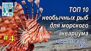 ТОП 10 Самых необычных рыб для вашего морского аквариума