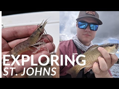 How To Fish New Water? Fishing Jacksonville, FL. St. Johns River MULTI SPECIES