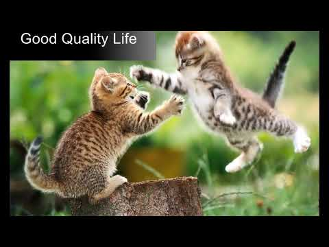 Cod Liver Oil For Cats