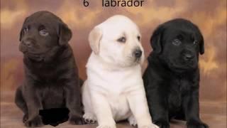 top10 gevaarljikste honden