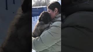Щенки кавказской овчарки и алабая, возраст 1 мес 11 дней, вес 6,5 кг