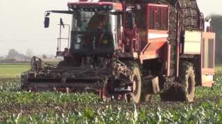 Sugar Beet harvesting in Norfolk Fenland, Holmer T3, Terra Dos. 15/11/2013.