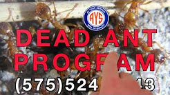 At Your Service - Pest Solutions, Exerminators and Pest Control in Las Cruces NM