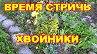 видео Стрижка хвойных растений
