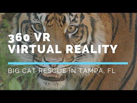 360 PSA for Big Cat Rescue
