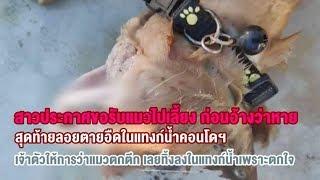 สาวขอรับแมวไปเลี้ยงก่อนอ้างหาย สุดท้ายพบตายอืดในแทงก์น้ำคอนโด อ้างทิ้งเพราะตกใจ ทำอะไรไม่ถูก